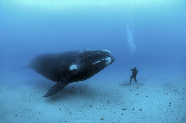 whalee